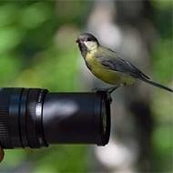 カメラマンに興味津々~動物愛好者へ (`・д・ノノ゙☆パチパチ