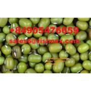 green mung bean 緑緑豆
